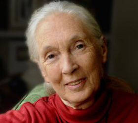 Jane Goodall Results Image